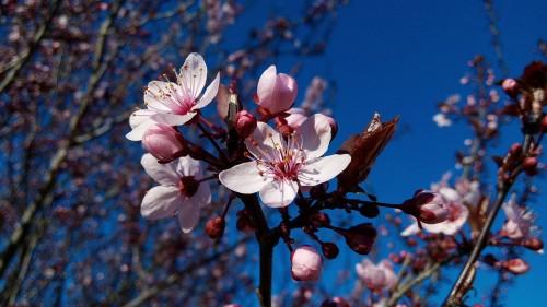 almond-trees-979518_1280
